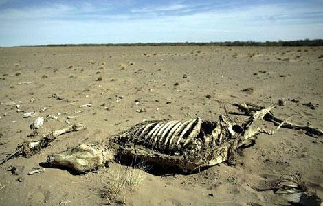 Una vaca muerta sobre lo que antes era un prado.|Walter Silvera