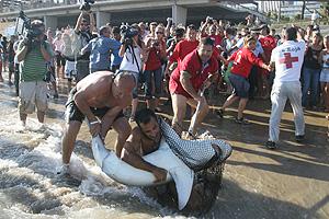 Los técnicos tras apresar al tiburón. (Foto: EFE)