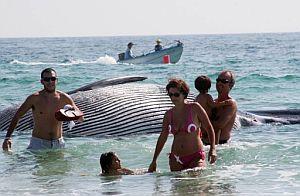Una familia se aleja del cadáver de la ballena. (Foto: EFE)
