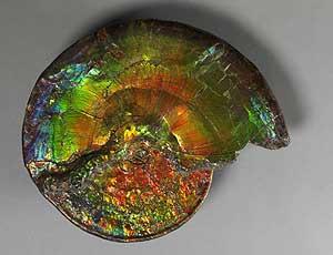 El museo  de Nueva York exhibe una enorme amonita multicolor 1190884254_0