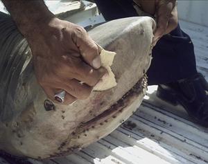 Imagen del tiburón encontrado en un río iraquí. (Foto: REUTERS)