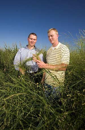 Los autores de la investigación muestran su hierba para hacer etanol (Foto: USDA-ARS / PNAS)