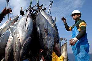 Unh pescador descarga atunes en Zagreb, en febrero pasado. (Foto: AFP)