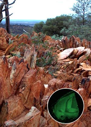 La zona de Jack Hills, en Australia, donde se han hallado los zircones más antiguos del planeta, con una edad de más de 4.000 millones de años. (Foto: B. Watson & M. Hopkins / Nature)