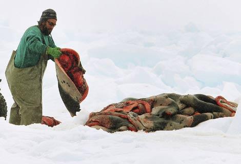 Un cazador amontona pieles de foca. | Reuters