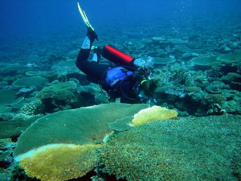 Un buceador observa el estado de los corales, que presentan blanqueamiento. (Foto: Fundación BBVA)