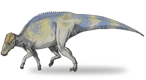 Recreación de un 'Brachylophosaurio canadiensis'.