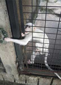 Un mono en una vieja jaula en la azotea.|Efe