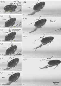 Fotogramas del vídeo de un salto. | G. S.
