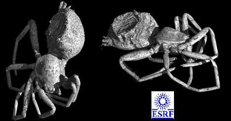 Reconstrucción en 3D de la araña descubierta. | Fundación Dinópolis