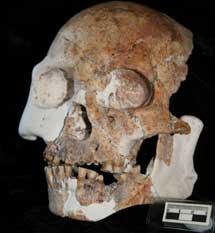 Cráneo de Longlin (China). |Darren Curnoe