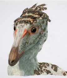 'Troodon formosus'. | AMNH/J. Brougham