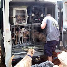 Los perros recién sacados de la perrera. | J.M.