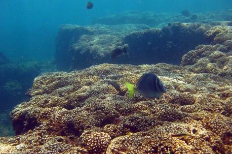 Un arrecife de coral en Panamá. | Science