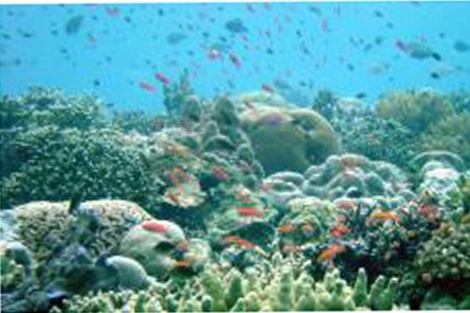 Arrecife de Coral en Indonesia. | Science
