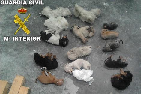 Algunos de los perros hallados congelados en un arcón. | G. C.
