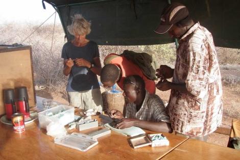 Meave Leakey (i) y Cyprian Nyete (d) junto a los fósiles de 'KNM-ER 60000', en 2009. | M. L.
