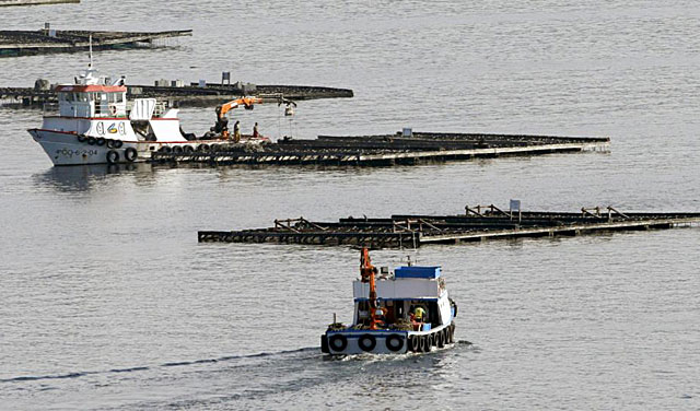 El polígono de bateas del puerto de Muros donde se ha hundido el pesquero Serviola I. | Efe