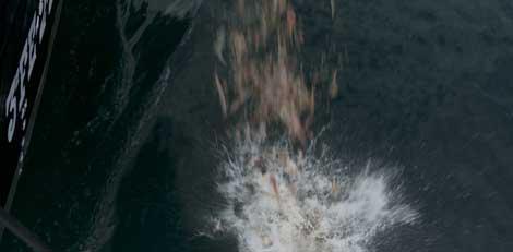 Los peces que se vuelven a lanzar al mar están ya muertos o heridos. |KEO Films.