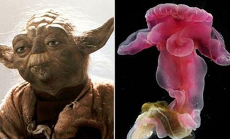 Parecido entre los labios del gusano y las orejas de Yoda. | EM