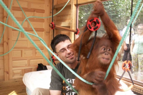 Pablo Herreros, jugando con un colega orangutn. | El Mundo