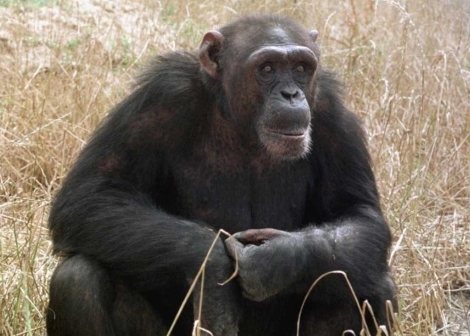 la crisis de los 40 de los monos