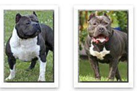Los dos perros del fallecido. | E. M.