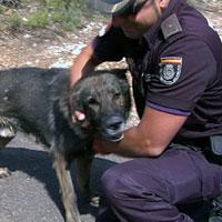 Animales que salvan vidas 1375110677_extras_ladillos_1_0