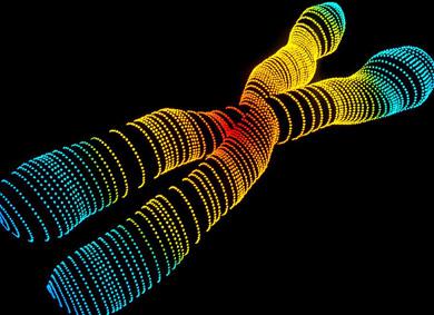 Recreación en 3D del cromosoma 'X'. | Alfred Pasieka