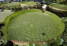 De las 10 plantas más raras.| Rosa González