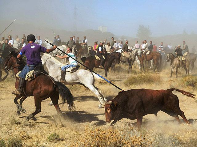 'Vulcano', el toro alanceado este año en Tordesillas. | Pedro Armestre / Afp