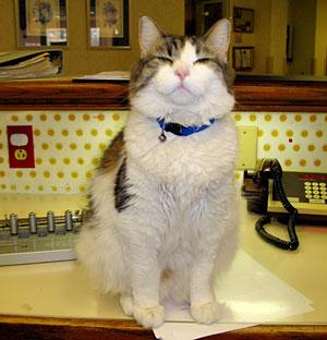 El gato Oscar. Vea el vídeo. (Foto: Joan Teno)