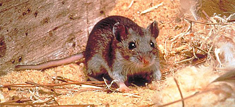 hantavirus pulmonary syndrome research paper Access to over 100,000 complete essays and term papers hantavirus pulmonary syndrome is a rodent-borne viral all papers are for research and reference.