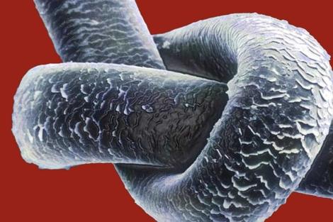 Un pelo humano visto a través del microscopio. | Foto: CIE