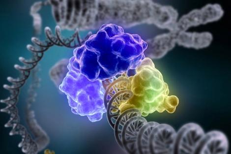 Un estudio desvela los componentes activos del genoma. | Institutos Nacionales de Salud