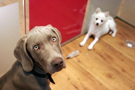 Un perro mira a cámara; otro, tumbado en segundo plano