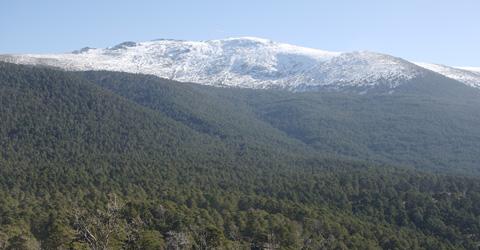 valsain forest